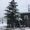 雪!雪!雪!!!